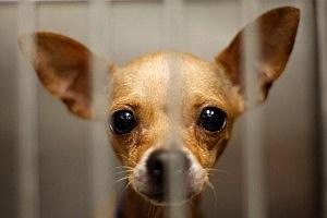 Animal Shelter Adoptathon Home4 the Holidays