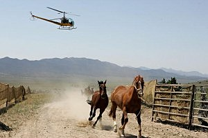 Wild horse roundup, Getty Images