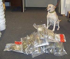 Drug dog Blitz, Sweetwater County Sheriff's Office