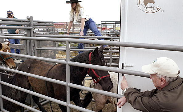 BLM wild horse adoption, Jeff T. Green, Getty Images