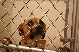 Metro Animal Shelter, Justin Pehrson, K2 Radio