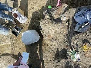 Lee Rex dig site, Tate T.rex blog, Casper College