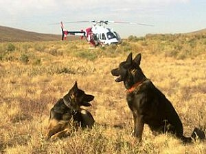 Search dogs Rip and Teff, Sweetwater County Sheriff's Office