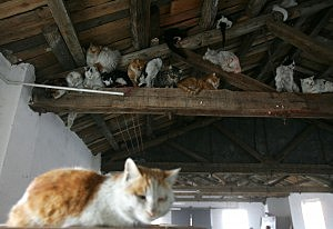 Rescued cats, Tainjin, 2007, China Photos, Getty Images