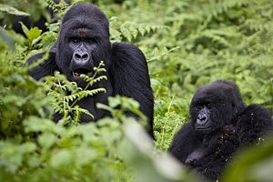 Virunga National Park, November 2008, Brent Stirton, Getty Images