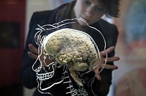 March 2011, Real Brain Exhibit, Bristol, England, Matt Cardy, Getty Images