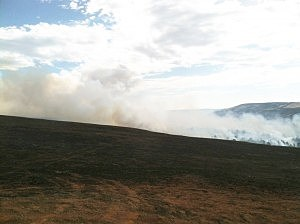 Sheep Herder Hill Fire Line on Casper Mountain