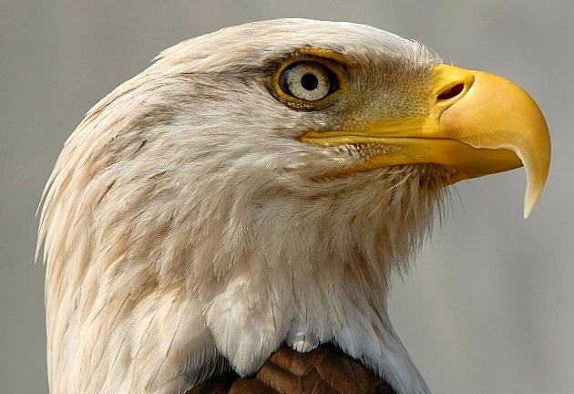 Eagle trafficking operation uncovered Featured