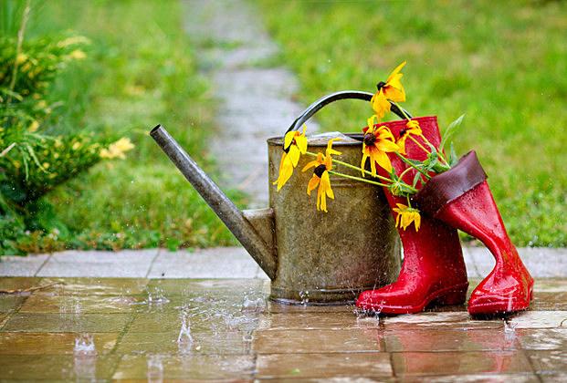 Garden tools under the rain