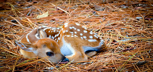 Wyoming game and fish leave wildlife babies alone for Wyoming game and fish regulations